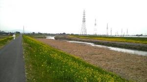 小山川の菜の花