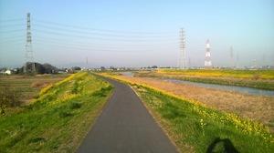 小山川土手菜の花